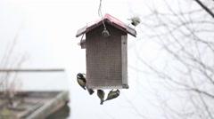 Stock Video Footage of Birds Feeding On Peanuts