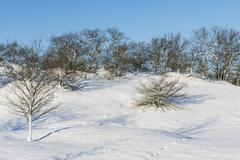 Small Snow Hills and Trees - stock photo