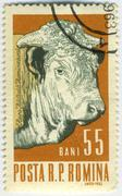 Stock Photo of Stamp with cow