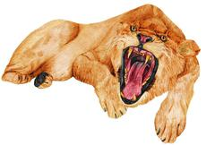 lioness growling - stock illustration