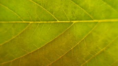 Life on the leaf Stock Footage