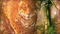 Stock Video Footage of Close-up of a female jaguar (Panthera onca), slow motion.
