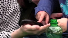 Myriapoda on child hand for teaching demonstration Stock Footage