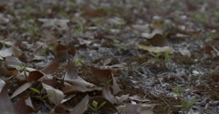 Autumn Falling leaves  (in slow motion) Stock Footage