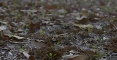 Leaves Falling in slow motion Stock Footage