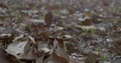 Dry leaves falling in slow motion Stock Footage