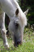 Hazy Grazing Horse Stock Photos