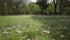 Sunny meadow Stock Footage