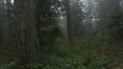 Forest Fog 3 Stock Footage