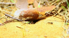Ants building an anthill, take out sand Stock Footage
