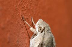butterfly sitting on a red brick wall large view - stock photo