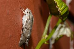 butterfly sitting on a red brick wall side view - stock photo