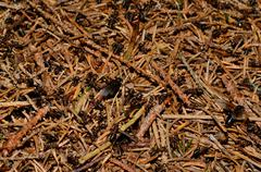Many small ants on a anthill in forest Stock Photos
