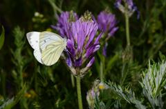 White butterfly on a flower in summer Stock Photos