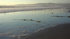 Shorebirds pick through the sand along California's central coast with people in - stock footage