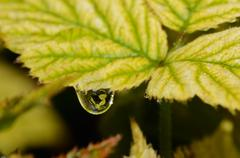 Raindrops on a leaf with a beautiful reflection Stock Photos