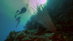 UltraHD underwater shot of scubadivers at coral reef wall, Palau Stock Footage
