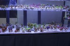 aquarium  corals seller - stock photo