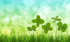Close-up shot of four-leaf clovers in a field. Stock Photos