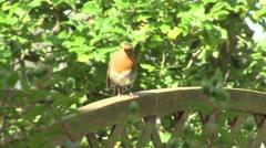 Robin on Garden Fence -.mp4 Stock Footage