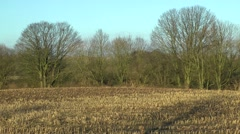 Winter field with stubble rural scene - stock footage