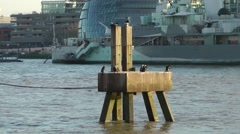 Wooden structure in Thames London cormorants Stock Footage