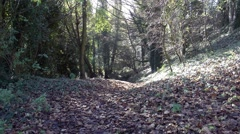 Path covered in fallen leaves autumn Stock Footage