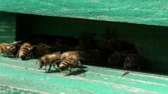 Unrestful bees in green beehive Stock Footage
