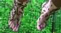 Garra Rufa fishes cleans epidermis from woman feet Footage