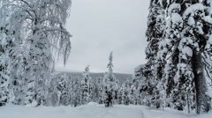 Finland Snowy Forest Stock Footage
