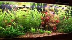 Fishes and water plants in aquarium Stock Footage