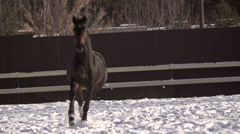 Beautiful horse running in the meadow, rest after exercise Stock Footage