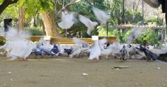 Seville day light park birds crowd 4k spain Stock Footage