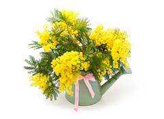 Gift for spring holidays. Stock Photos