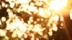 Defocused of Sunlight through tree - stock footage