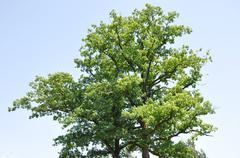 Treetop - stock photo