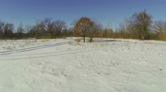 Tree with withered leaves in the winter forest. Aerial view. Stock Footage