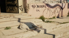 Urban decay day-time, dog sleeping on porch old broken building block Stock Footage