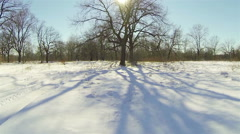 Tree in the sun in the winter. Camera movement from the bottom up. Aerial. Stock Footage