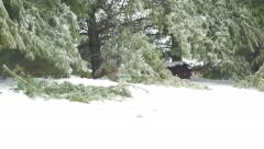 4K panning right to left of trees with branch broken from ice storm Stock Footage