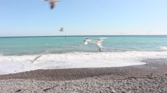 A flock of seagulls. Stock Footage