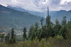 Beautiful forest, Manali Stock Photos