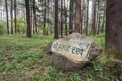 Beautiful forest, Manali - stock photo