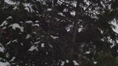 Snow covered tree pine winter Stock Footage