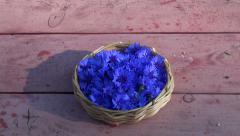 medical cornflower blue blossoms in basket on old  table - stock footage