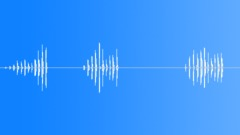 Bird Song. Common chiffchaff Sound Effect