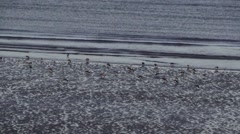 Birds on Ireland beach Stock Footage