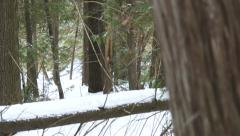 Snowy environment in Canadian regional park Stock Footage