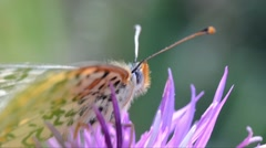 Portrait of Buttefly on a flower Stock Footage