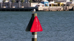 Seagull On A Channel Marker Stock Footage